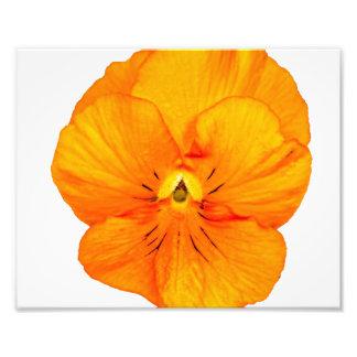 Un pensamiento anaranjado simple fotografías