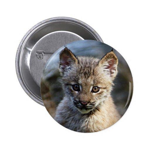 Un pequeño gatito canadiense lindo del lince pins