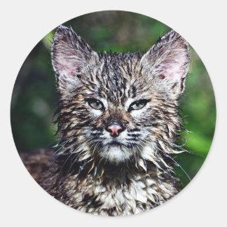 Un pequeño gatito mojado del lince pegatina redonda