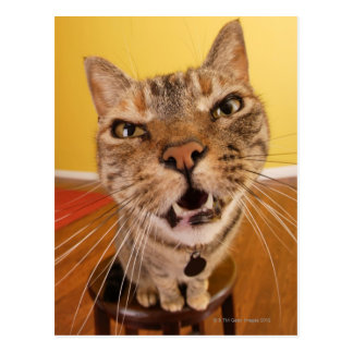 Un pequeño gato chistoso se sienta en un taburete postal