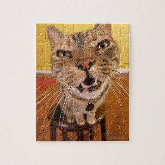 Un pequeño gato chistoso se sienta en un taburete puzzle