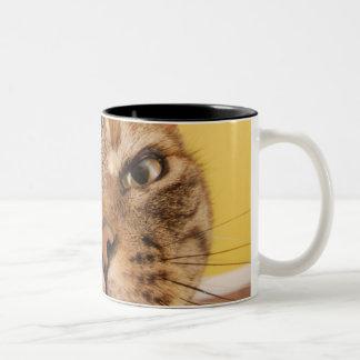 Un pequeño gato chistoso se sienta en un taburete taza de dos tonos