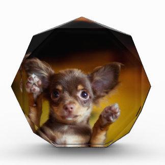 Un pequeño perro nombrado Bosse