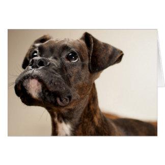Un perrito Brindle del boxeador que mira para arri Tarjeta