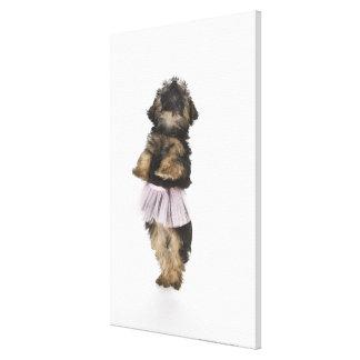 Un perrito de Yorkie-poo en un tutú en sus piernas Lona Estirada Galerías