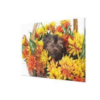 Un perrito de Yorkie-Poo en una cesta de artificia Impresiones En Lienzo Estiradas