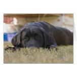Un perrito del labrador retriever tarjeta de felicitación