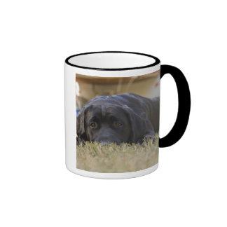 Un perrito del labrador retriever taza de dos colores