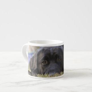 Un perrito del labrador retriever taza espresso