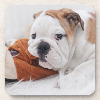 Un perrito inglés del dogo que juega con un dogo posavasos
