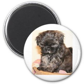 Un perrito lindo de Shih Tzu hace este producto ad Imán Redondo 5 Cm