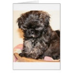 Un perrito lindo de Shih Tzu hace este producto ad Tarjeta