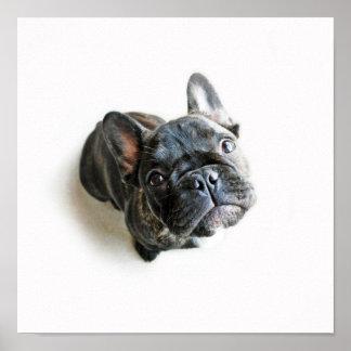 Un perrito lindo del dogo francés póster