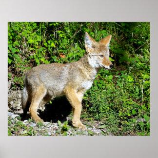 Un perrito nervioso del coyote póster