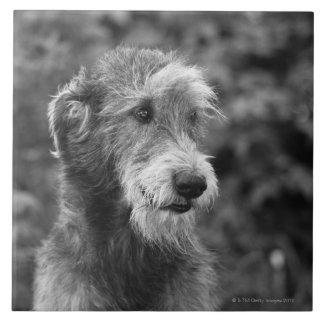 Un perro afuera azulejo cuadrado grande