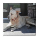 Un perro con historia tejas  cerámicas