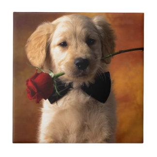 Un perro con una flor azulejo cuadrado pequeño