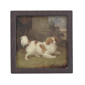 Un perro de aguas de Blenheim, c.1820-30 (aceite e Caja De Regalo De Calidad