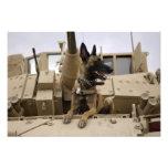 Un perro de trabajo militar se sienta en un M2A3 Fotografías