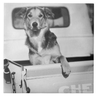 Un perro en un coche azulejo cuadrado grande