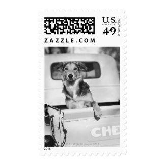 Un perro en un coche estampilla