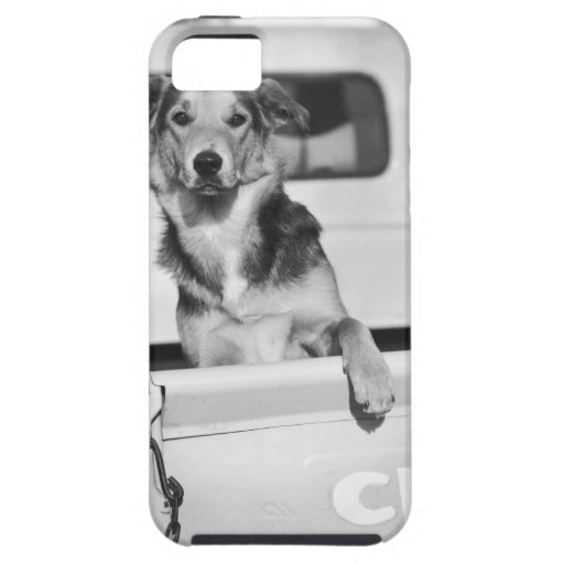 Un perro en un coche iPhone 5 coberturas