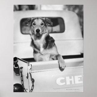Un perro en un coche poster