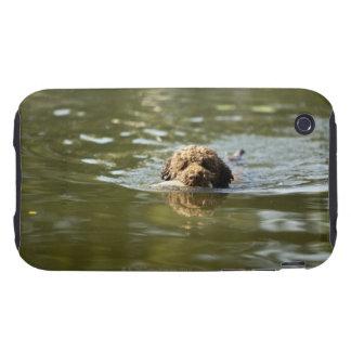 Un perro juguetón se refresca apagado en el calor carcasa though para iPhone 3
