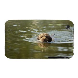 Un perro juguetón se refresca apagado en el calor Case-Mate iPhone 3 fundas
