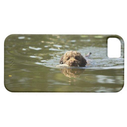 Un perro juguetón se refresca apagado en el calor  iPhone 5 Case-Mate cobertura