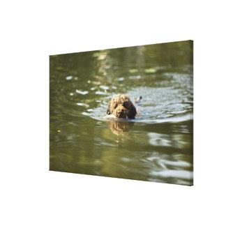 Un perro juguetón se refresca apagado en el calor impresion en lona