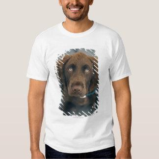 Un perro marrón playera