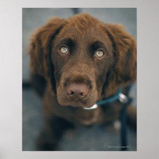 Un perro marrón póster
