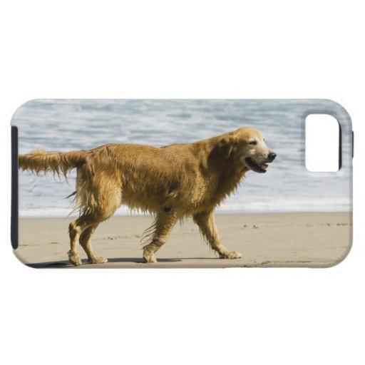Un perro mojado en la playa iPhone 5 Case-Mate carcasas