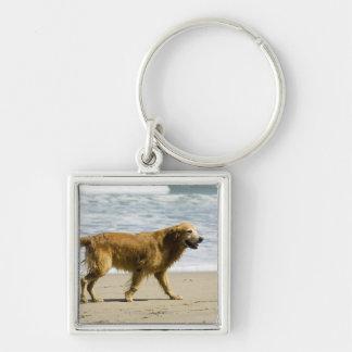 Un perro mojado en la playa llavero cuadrado plateado