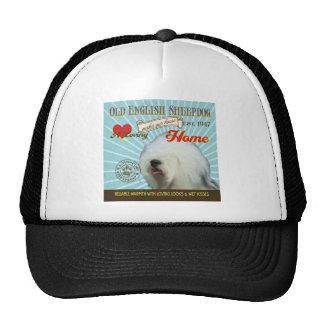 Un perro pastor inglés viejo cariñoso hace nuestro gorras de camionero