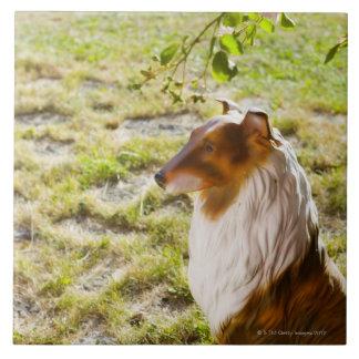 Un perro plástico en un jardín azulejo cuadrado grande