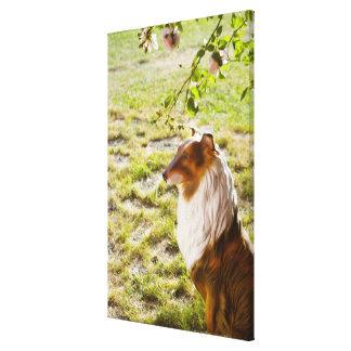 Un perro plástico en un jardín impresión en lienzo