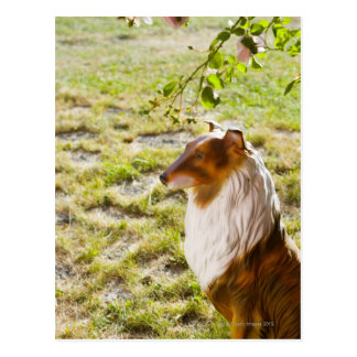 Un perro plástico en un jardín tarjeta postal
