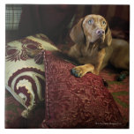 Un perro que miente en las almohadas azulejos ceramicos