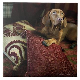 Un perro que miente en las almohadas azulejo cuadrado grande