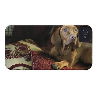 Un perro que miente en las almohadas iPhone 4 cárcasas