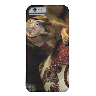Un perro que miente en las almohadas funda de iPhone 6 barely there