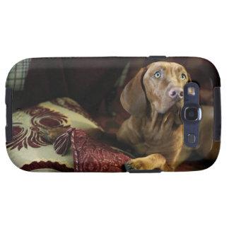 Un perro que miente en las almohadas galaxy SIII cárcasa