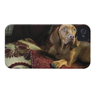 Un perro que miente en las almohadas Case-Mate iPhone 4 protector