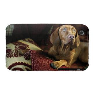 Un perro que miente en las almohadas iPhone 3 fundas