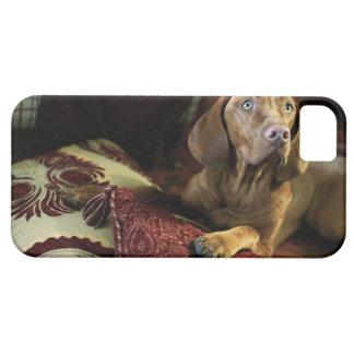 Un perro que miente en las almohadas iPhone 5 coberturas