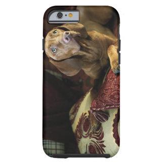 Un perro que miente en las almohadas funda de iPhone 6 tough
