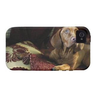Un perro que miente en las almohadas Case-Mate iPhone 4 funda