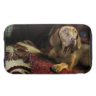Un perro que miente en las almohadas iPhone 3 tough carcasa